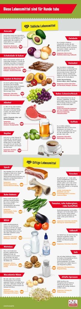 Giftige-Lebensmittel-fuer-den-Hund