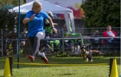 Welcher Hundesport ist gut für meinen Hund