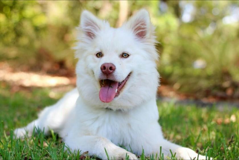 Können Hunde lachen?
