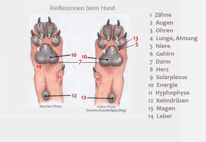 Pfoten Reflexzonen beim Hund